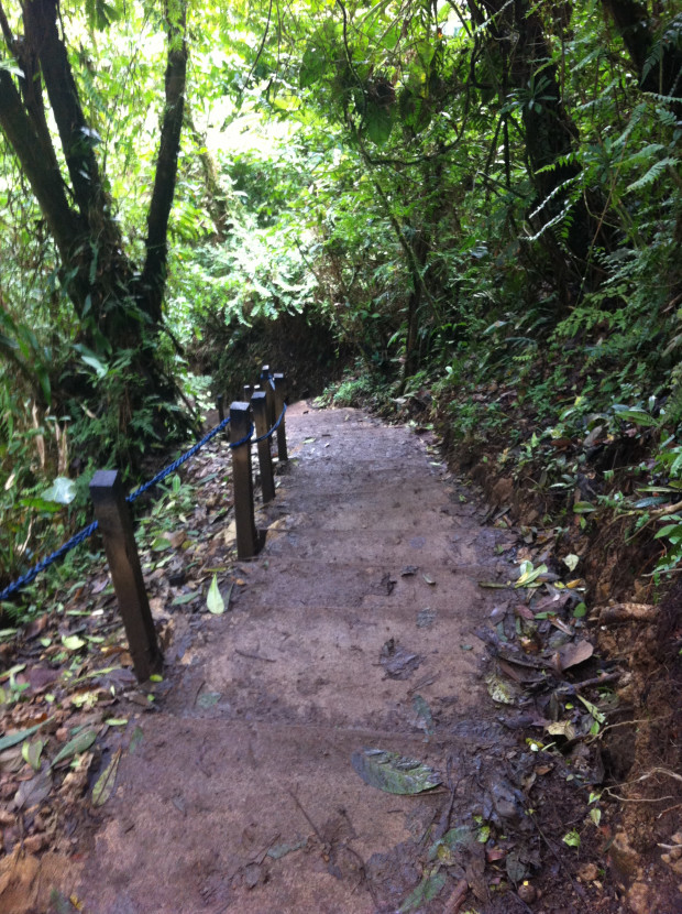 Mud, what mud? The trail leading into Tenorio National Park.