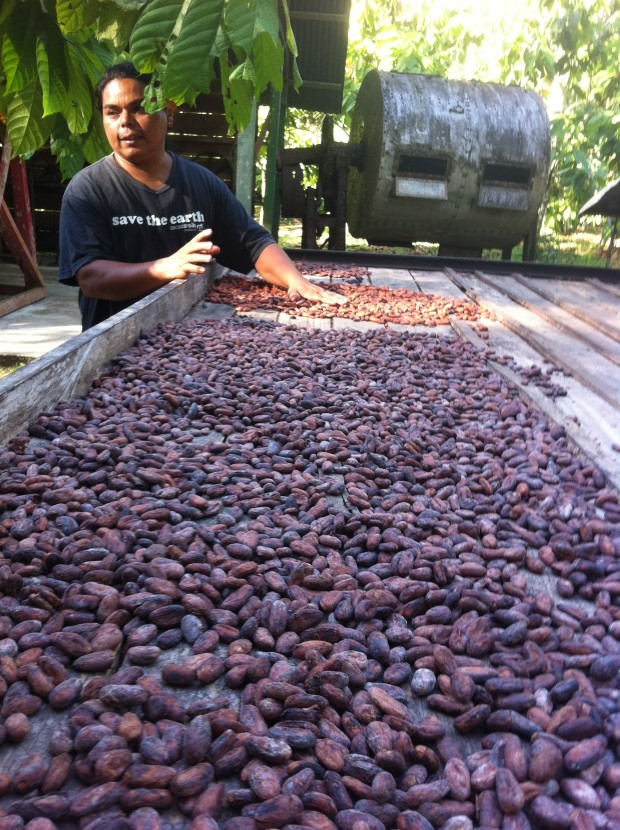 Tour guide Rafael Obando shows how chocolate beans are left to dry in the sun until they turn brown.