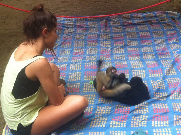 A spider monkey and a howler monkey wrestle like siblings in front of a volunteer at the Jaguar Rescue Center.