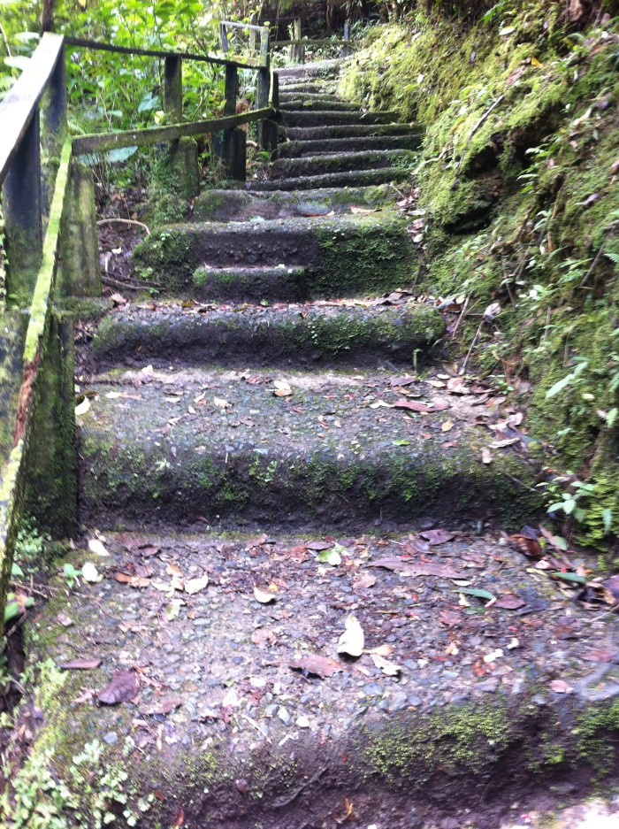 Moss stairs leading up to the lookout.