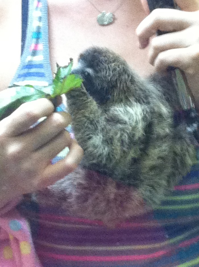 Baby sloth: Don't bother me, I'm eating.