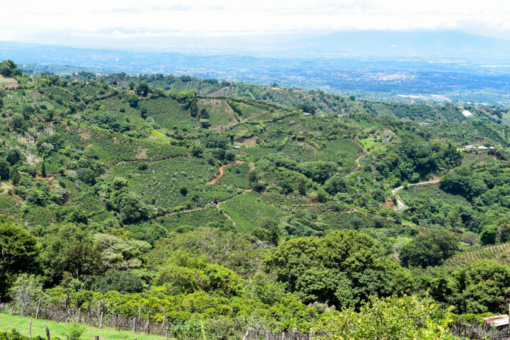 A view of Naranjo, a well-known producer of the best coffee in Costa Rica.