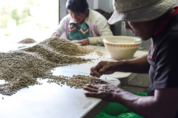 Dario Morales selects coffee at the Vista al Valle processing plant in Naranjo.