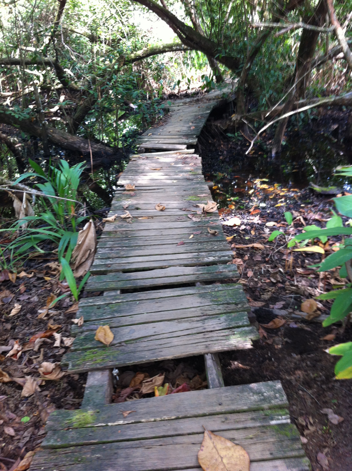 A bridge on the Crocodile Bay property.