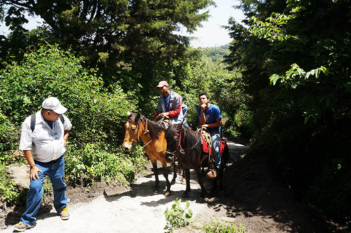 Locals follow tourists up Pacaya on horseback to carry weary hikers.