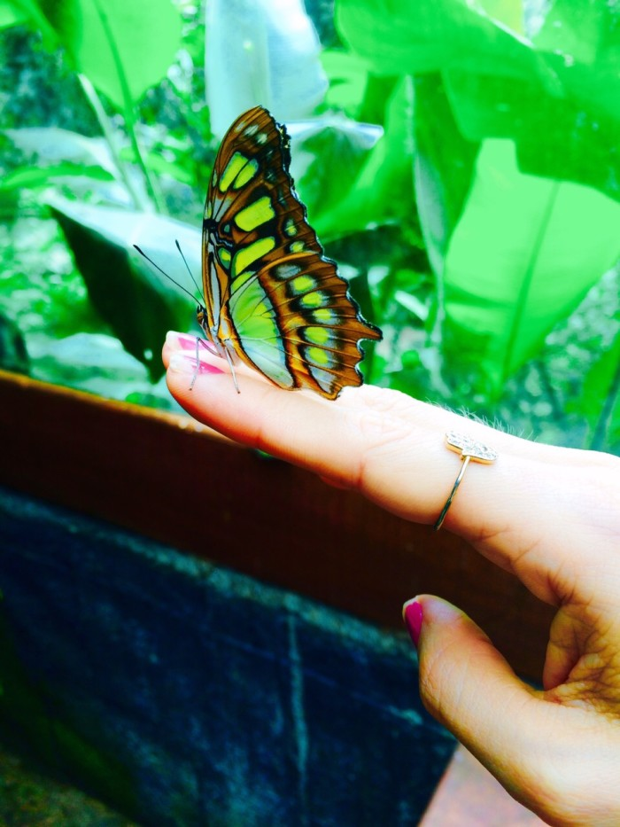 Initially just a butterfly house accompanying the waterfalls, La Paz has blossomed under a larger offering of animals.