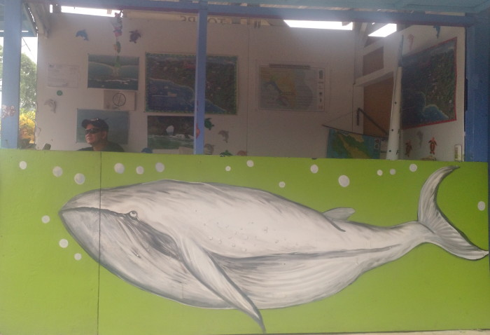 The whale is much more than just a mascot for Uvita.