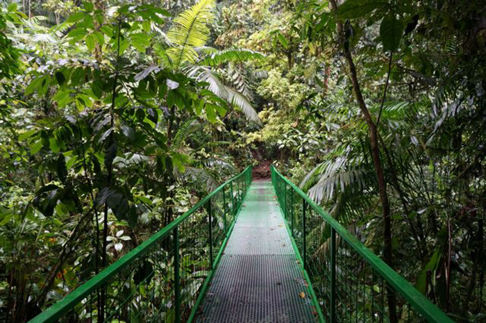 Walk this way: The trails here come with plenty of rain forest.