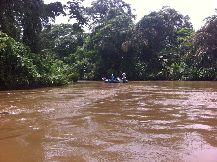 The green and brown world of the approach to Tortuguero.