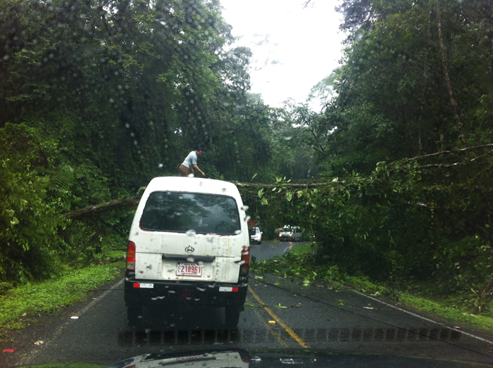 With a tree across the road and a man chopping at it with a machete on the highway west of La Fortuna, the white van in front of us decided to just drive under him.