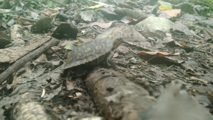 A turtle on the trail.
