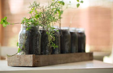 plants coming out of jar