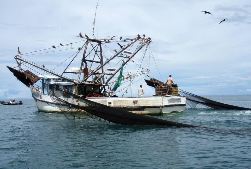 Future uncertain for shrimp trawling in Costa Rica – The Tico Times