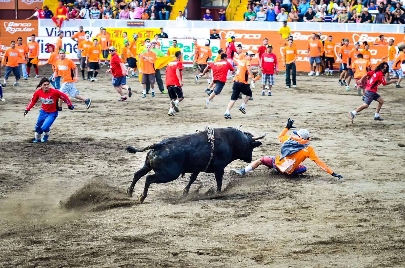 Fiestas de Zapote, toros a la Tica