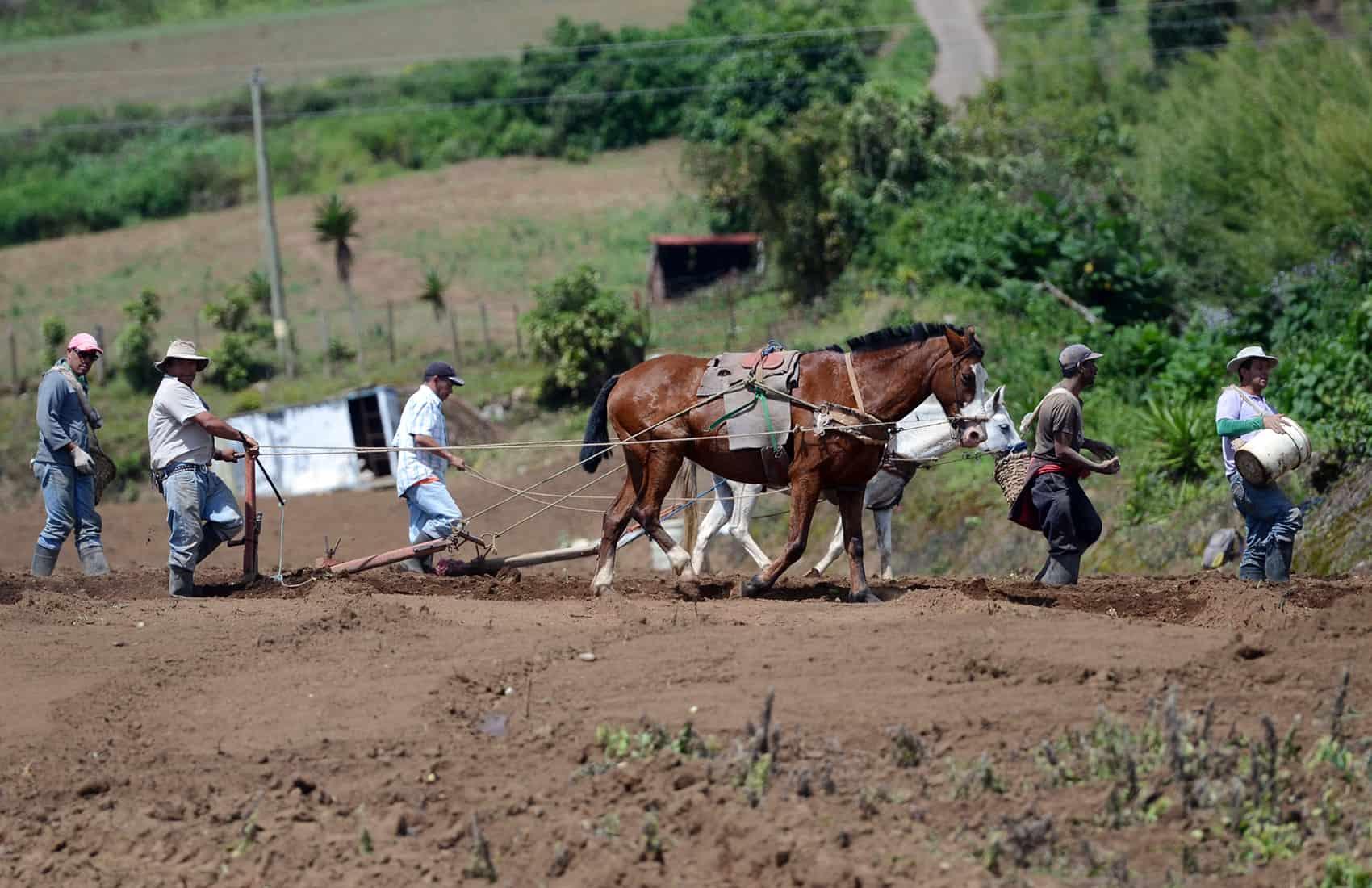 Farmers at Tierra Blanca, Cartago