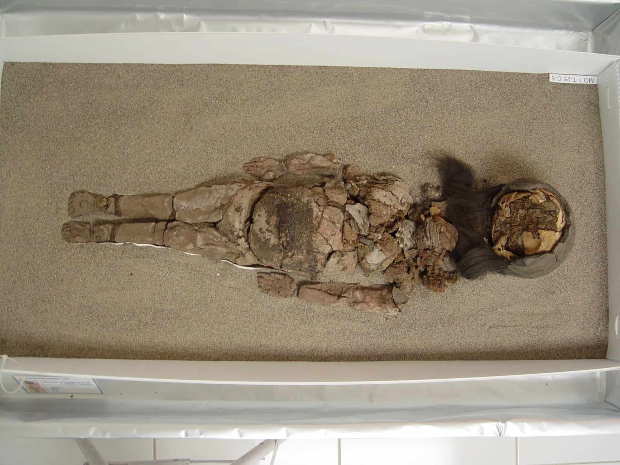 A Chinchorro mummy at San Miguel de Azapa Museum in Arica, Chile