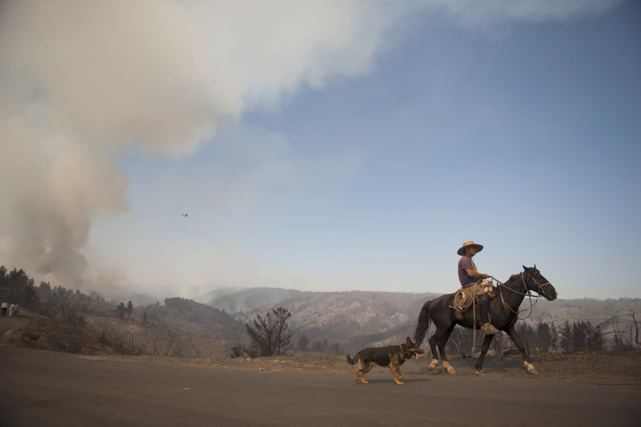 A Chilean cowboy going back home goes through areas affected by the forest fire, in Valparaiso, Chile on March 14, 2015.