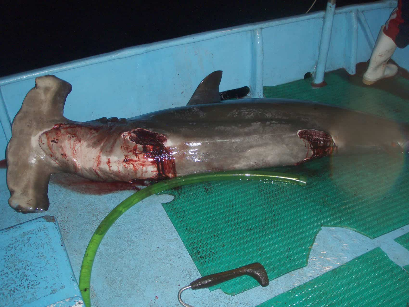 Shark finning | Costa Rica politics