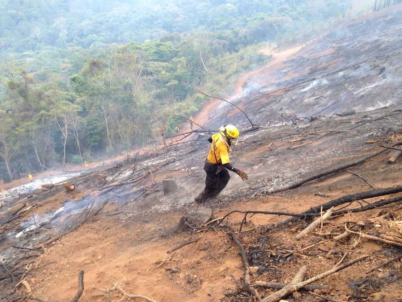 A firefighter on a burnt patch of land.