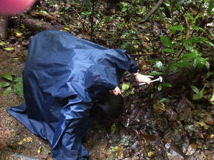 Sabrina Lewis, a nurse practitioner from Florida, peers at a tarantula inside a hollow log.