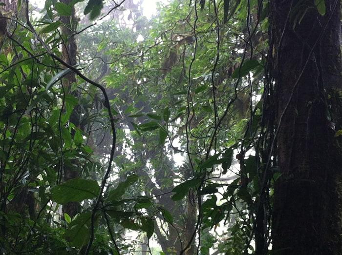 A Monteverde primer: an essential guide to one of Costa Rica's tourism gems