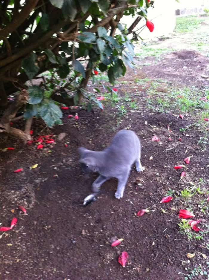 Cat plays with dead bird.