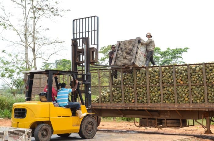 A trailer is filled with pineapples on Route 1856, at the Costa Rica-Nicaragua border, April 29, 2015.