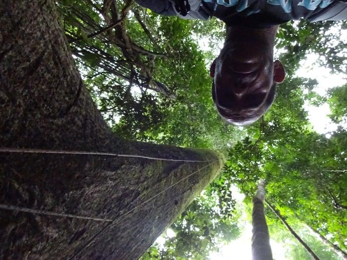 Self-portrait with big tree.