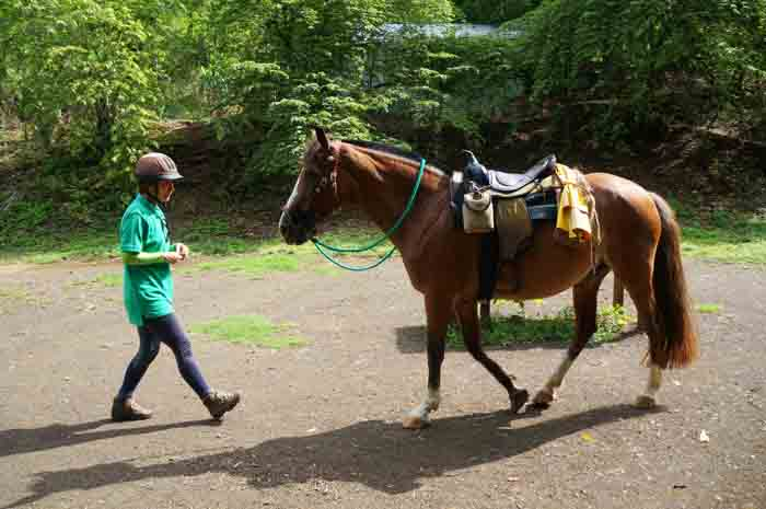 Andrea Wady uses the principles of natural horsemanship to train her horses.
