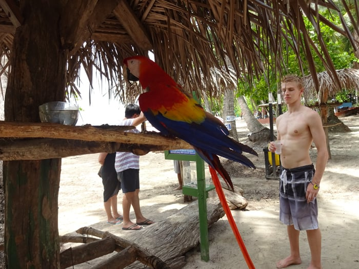Scarlet macaw with white tourist.