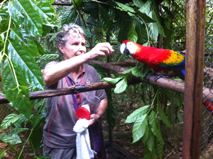 Carol Patrick offers an almond to Regalo the scarlet macaw.