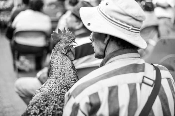 A rooster goest to mass with his owner.