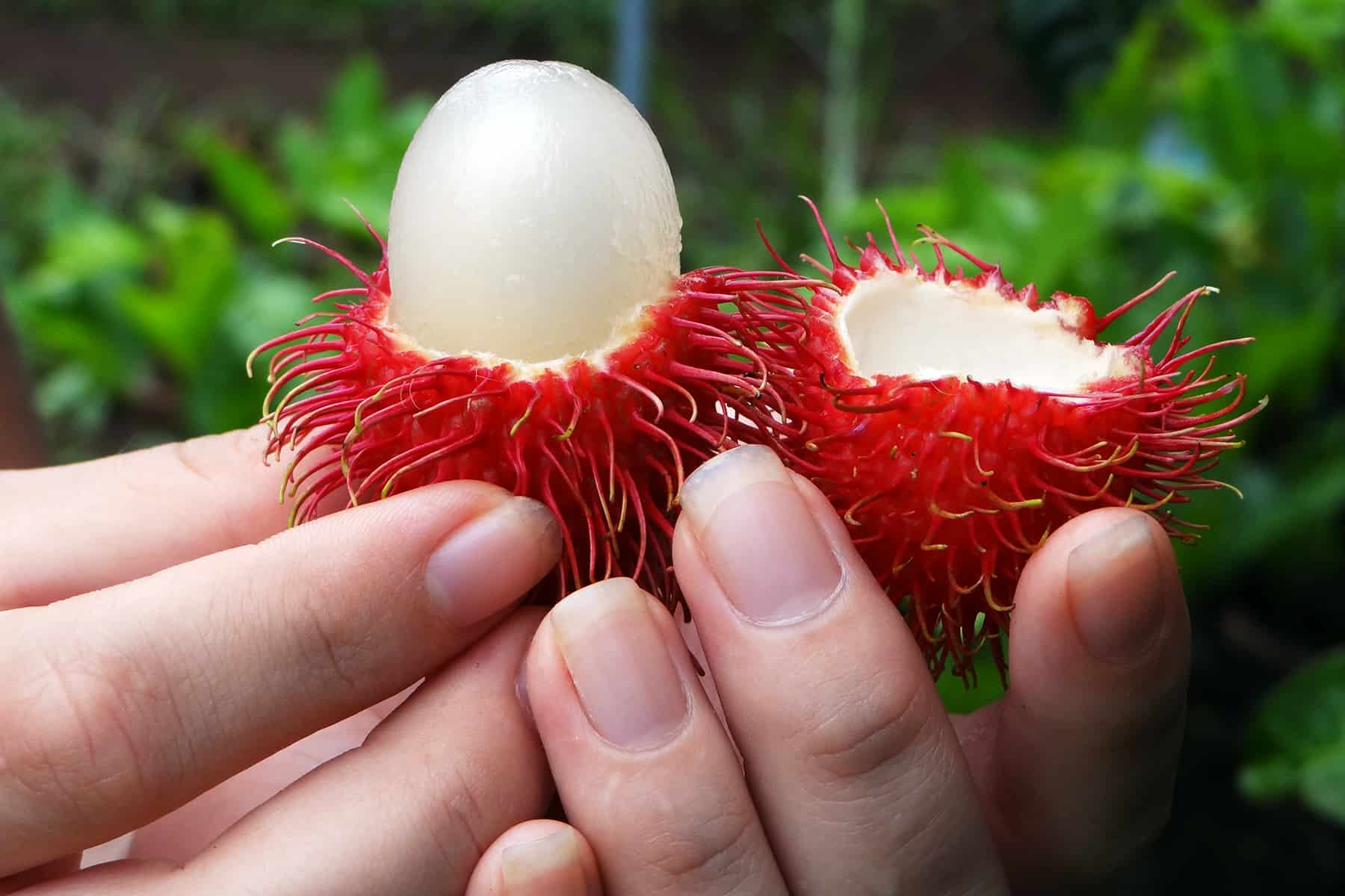 Rambután from Costa Rica