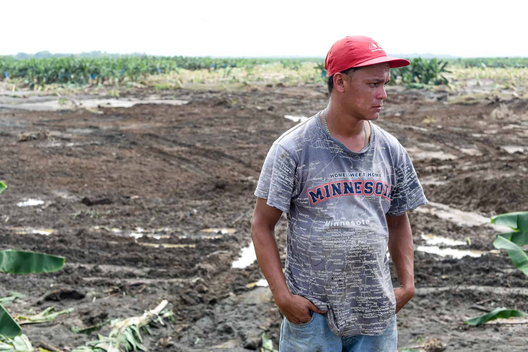 A banana plantation worker stands in a destroyed banana plantation field in Matina, Limón.
