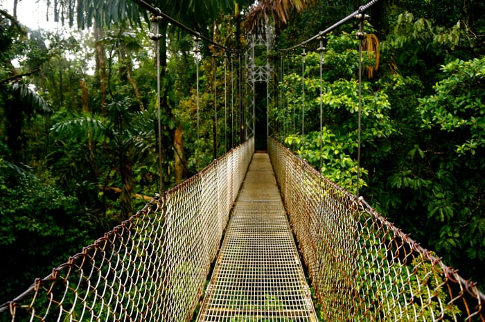 Yes, the bridge is safe. Now enjoy a panoramic view of the canopy of this pristine rain forest.