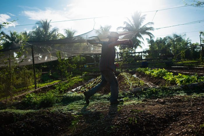 Eudaldo Garcia, 54, walks through the crops at Finca Marta.
