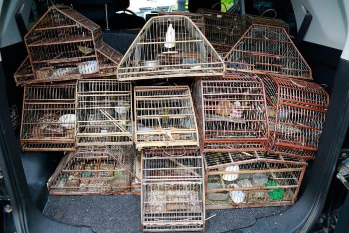 Rescued wild birds