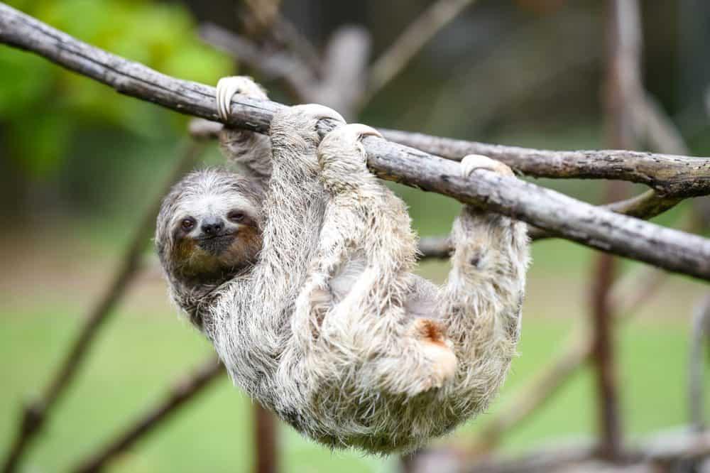 Sloth/'s Favorite Things Print