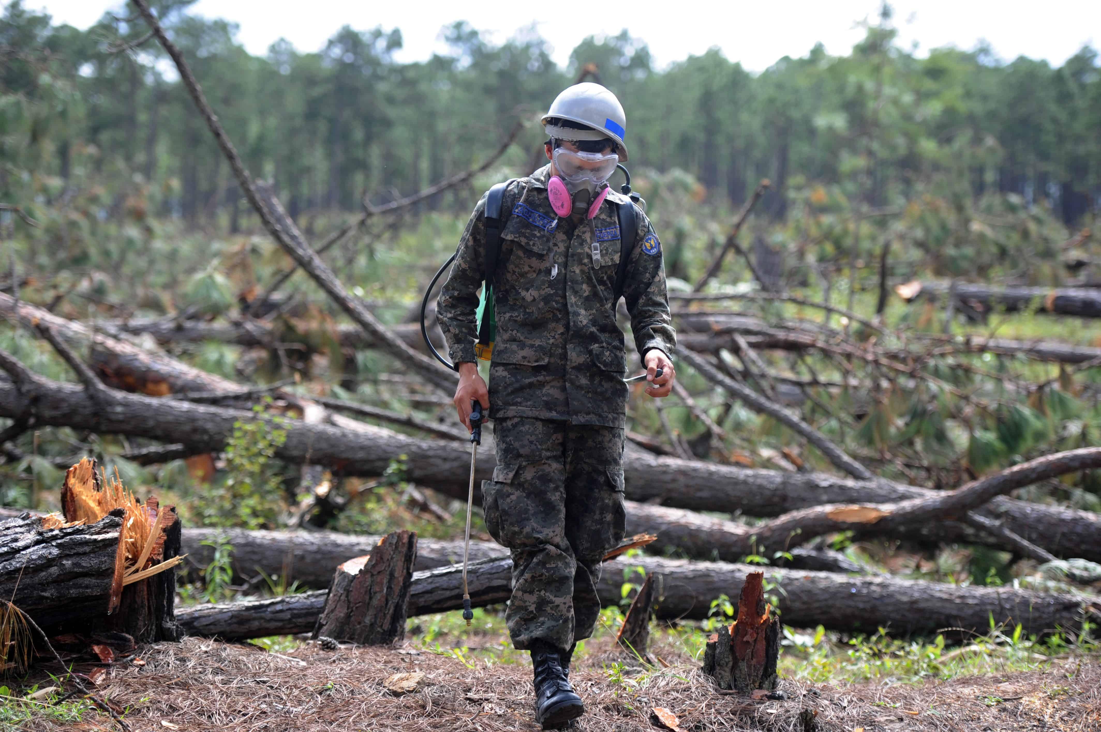 Honduran soldier battles southern pine beetle