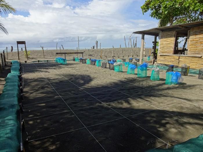 Turtle nursery at Playa Matapalo.