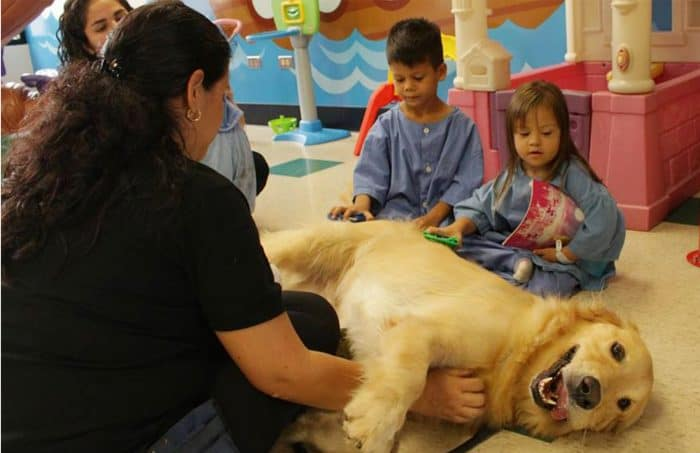 Dog therapy at San Vicente de Paul Hospital