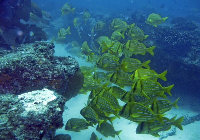 Cabo Pulmo National Marine park: Mexico conservation