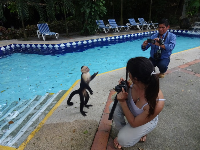 A bipedal monkey at poolside.