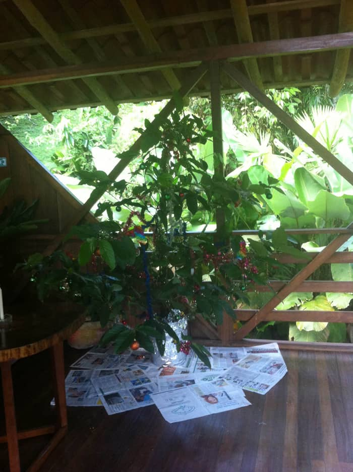 A tropical Christmas tree in the Selva Bananito rancho.