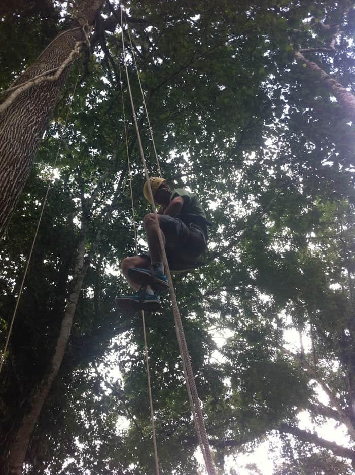Tree climbing at Selva Bananito.