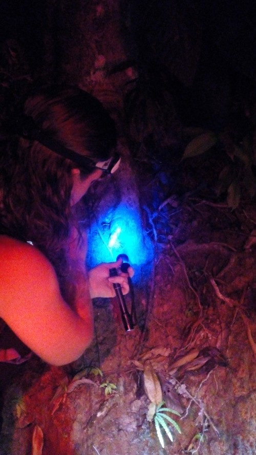 Tracie Stice peers into a trapdoor spider's hole.