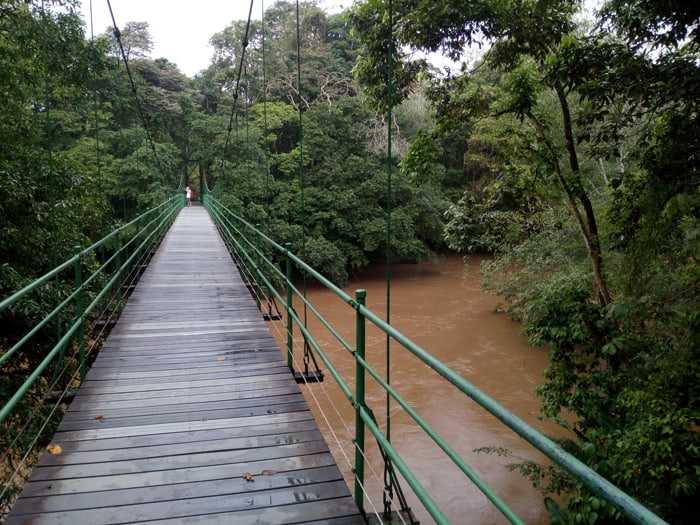 Río Puerto Viejo viewed from hanging bridge.