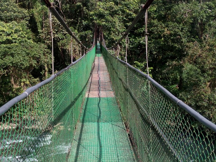 Suspended bridge over the Río Sarapiquí.