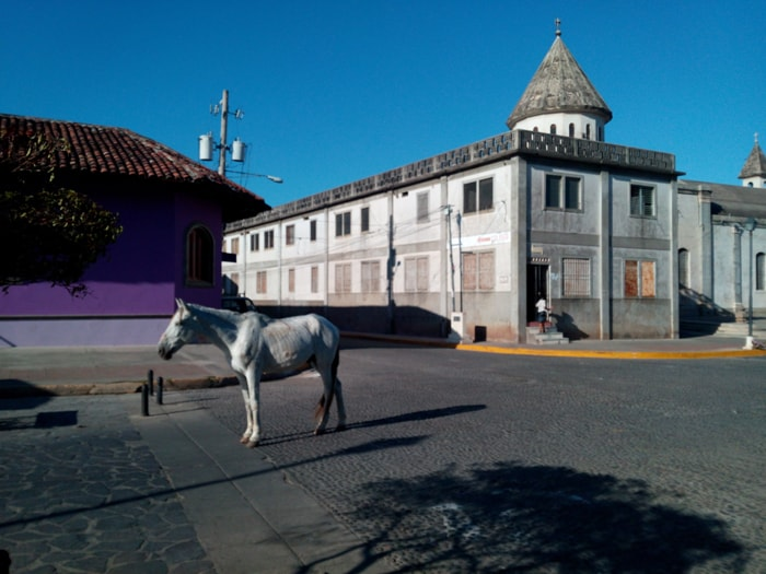 Random horse on the streets of Granada.