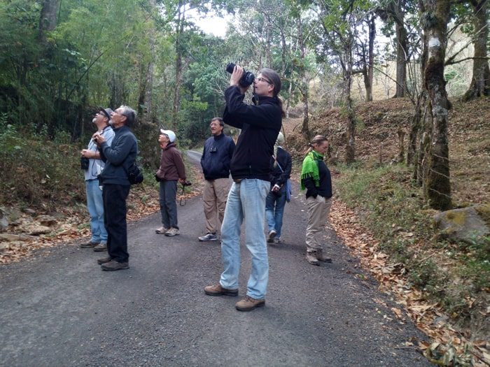 Now you see it, now you don't: Hopeful birders on the road in front of El Toucanet Lodge.